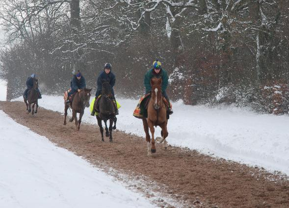 Galloping_in_the_snow_211210